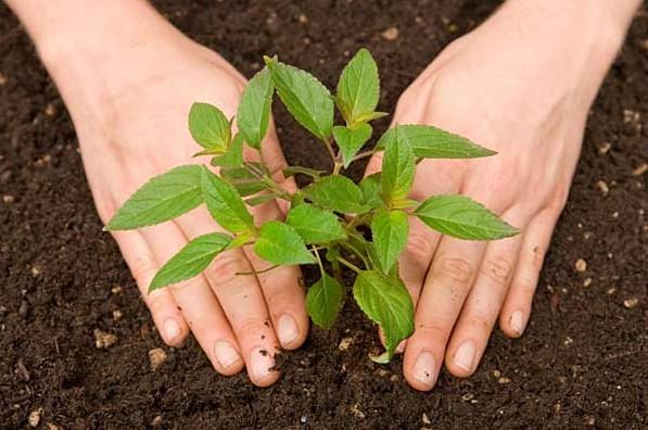 Calendar agricol 2017 – cand se planteaza legumele in gradina