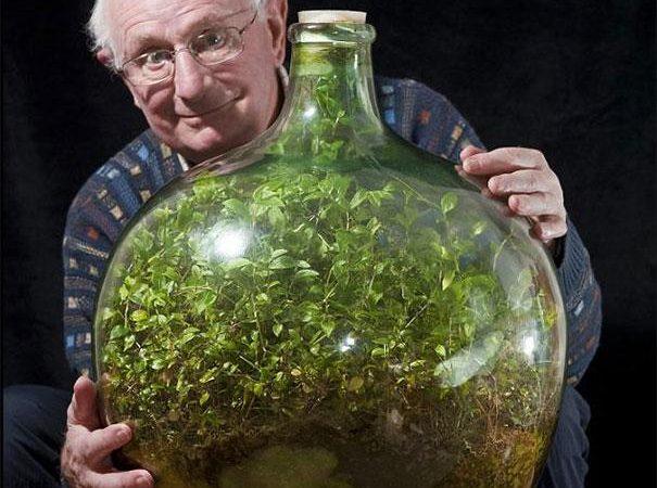 Un batranel de 80 ani si mica lui gradina din sticla care nu a fost udata din 1972. Plantele sunt verzi!